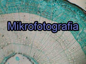 galeria-mikrofotgrafia