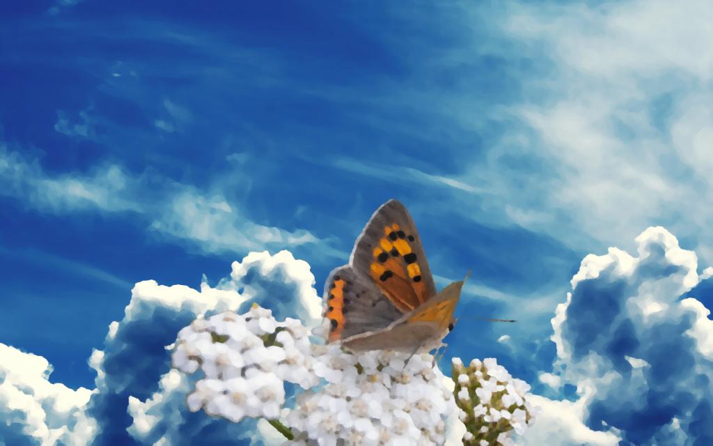 motyl na chmurach
