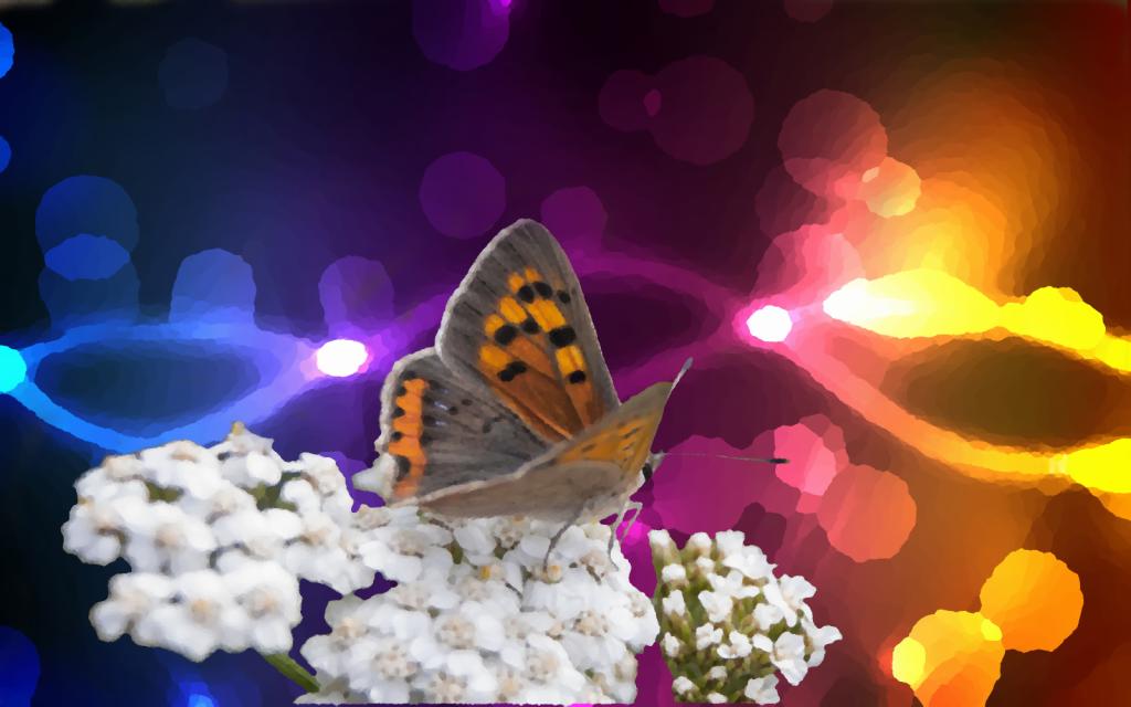 motyl na kolorze-got